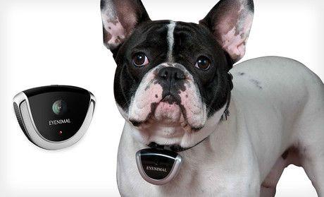 Eyenimal Pet Video Camera Deal of the Day | Groupon Abilene, TX