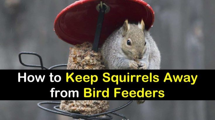 12 crafty ways to keep squirrels away from bird feeders