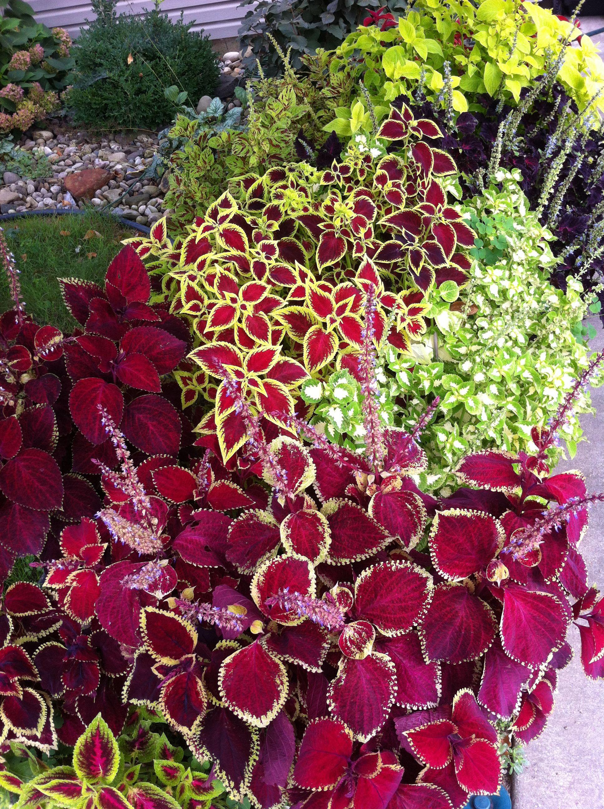 Gardening with texture & foliage Flowers, Fruit garden