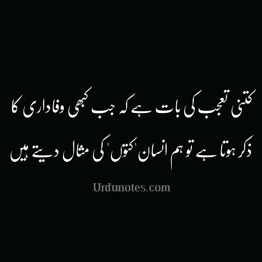 Funny Quotes In Urdu Funny Quotes In Urdu Funny Quotes Sarcastic Quotes Funny