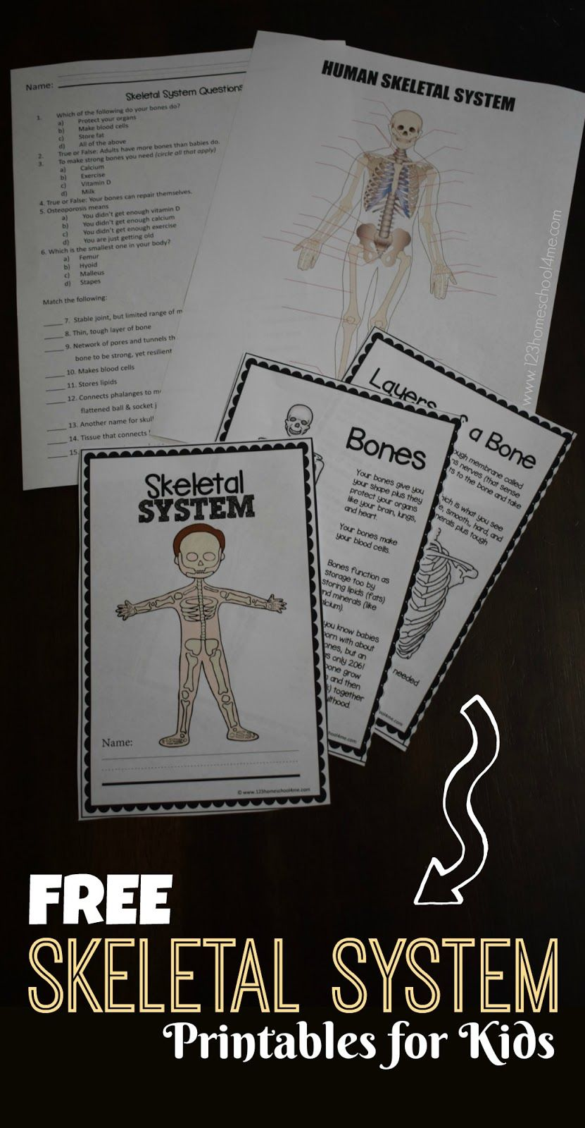 FREE SKeletal System for Kids Worksheets perfect for ...
