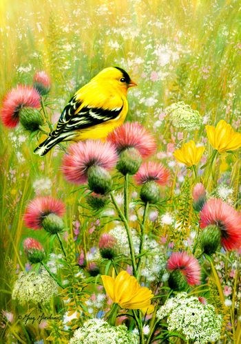 Flag Goldfinch Thistle Flower Field