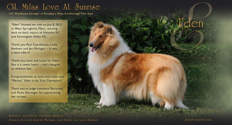 Glenshire Collies Ch Milas Love At Sunrise Collie Beautiful