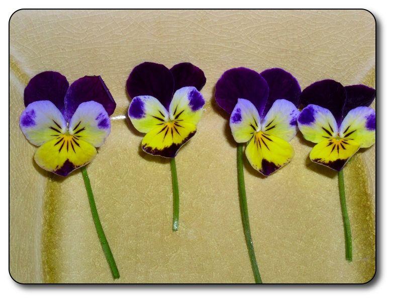 Johnny jump ups johnny jump up purple flowers pansies
