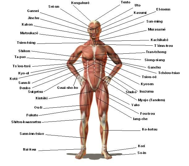15 Pressure Points On the Hand  Yahoo Image Search Results  My