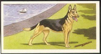 """Wills cigarettes issued this series of """"Dogs"""" in 1937 and enclosed them in Wild Woodbine Cigarettes."""