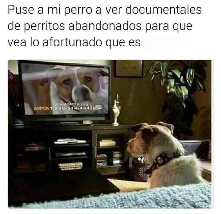 Documentales De Perritos Abandonados Humor Divertido Sobre Animales Mascotas Memes Imagenes Divertidas De Animales