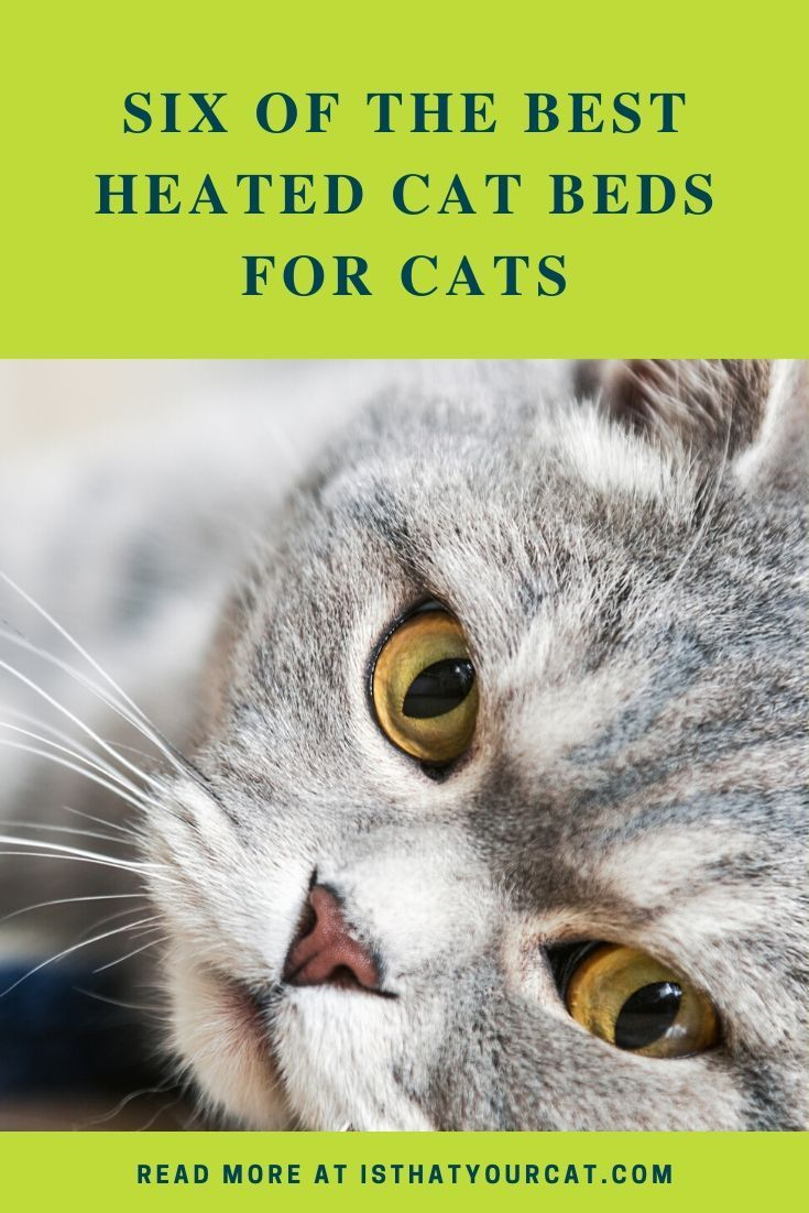 How To Recognize The Best Heated Cat Bed For Your Cat