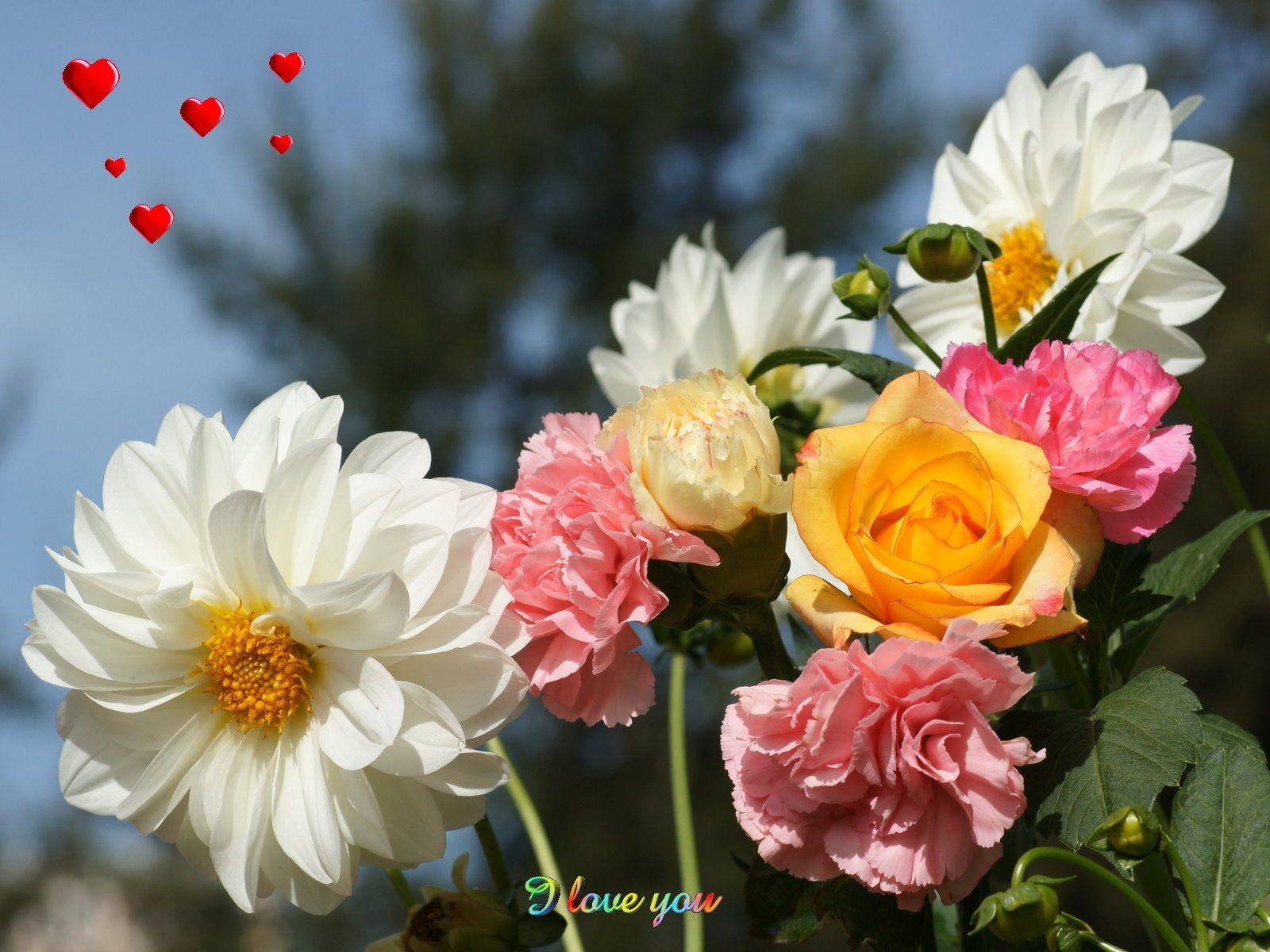 Beautiful Flowers In The World Flowers Typeofflower Beautiful