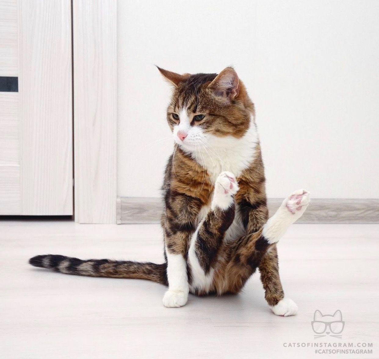 Pin By Viktoriya On Kotejki Cat Illnesses Cats And Kittens Kitten Care