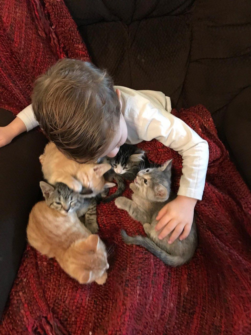 A Two Year Old Boy Sam Has Helped Foster 17 Kittens With His Family And He Takes Caring For Kitties In Need Very Seriousl Kittens Foster Kittens Work Friends