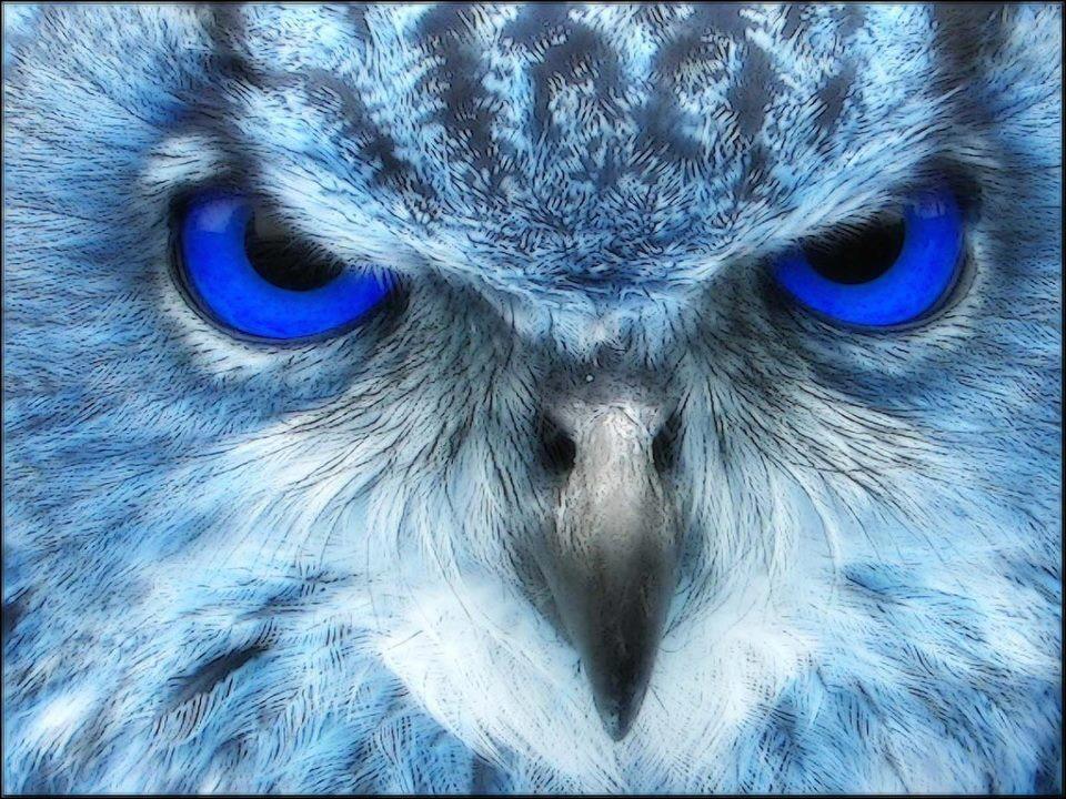 Buho Blanco, Uñas Azules Y