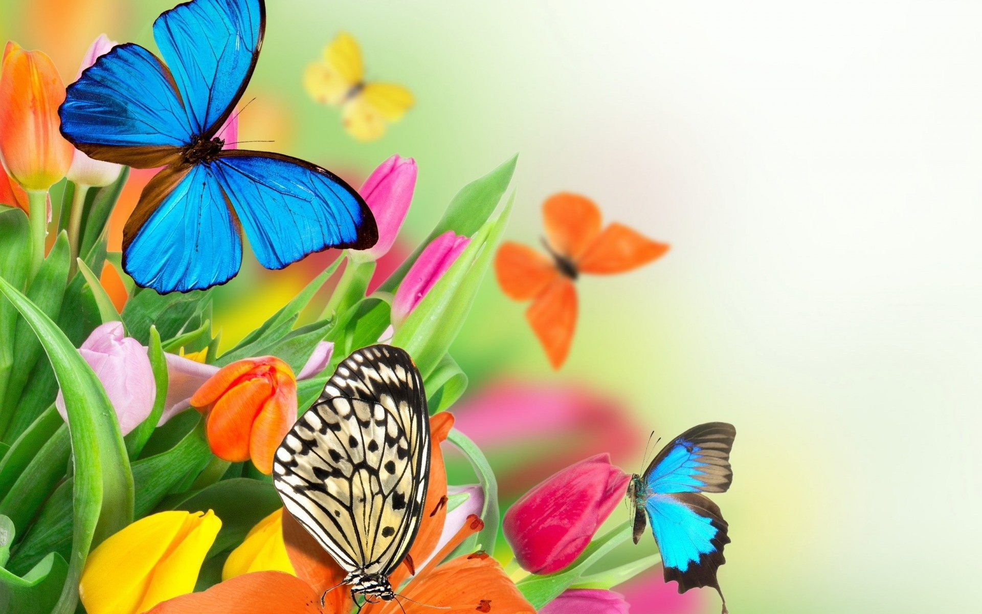 Free Butterfly Wallpaper High Quality Resolution ...