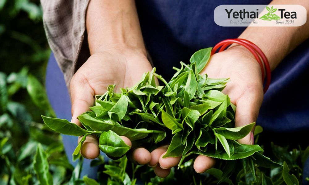 Have you ever try finding the best black tea manufacturers