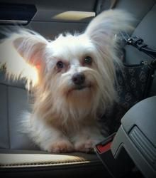 Adopt Jasper Adopted On Maltese Dogs Dogs Adoption