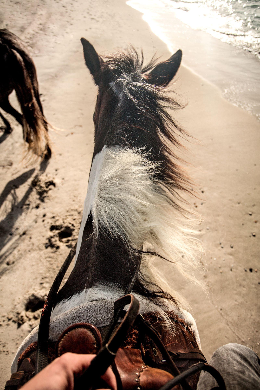 Pin op Fotoshoot met paard