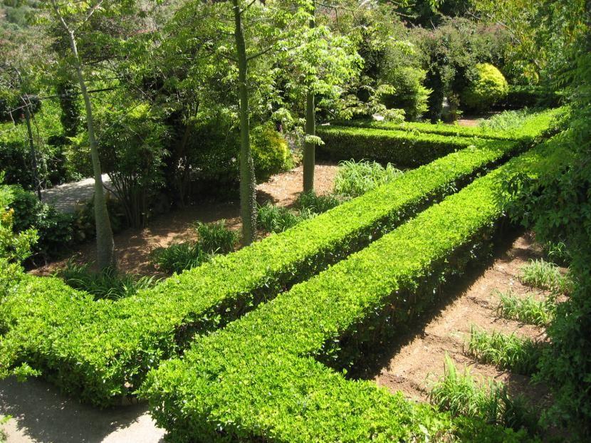 seleccin de arbustos para setos de crecimiento rpido