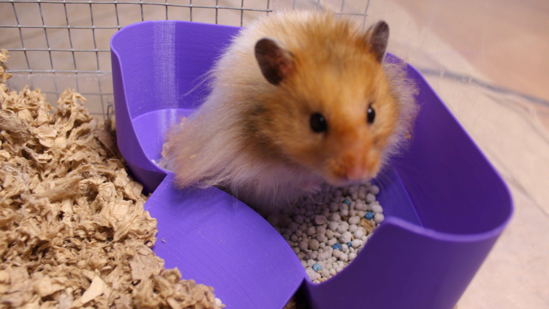 Hamster Dumpster The Bigger Better Hamster Potty Litter
