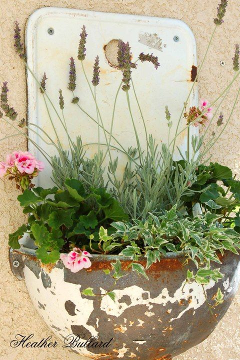French wall basin with variegated ivy, petite geraniums, & French lavender. Pretty combination.