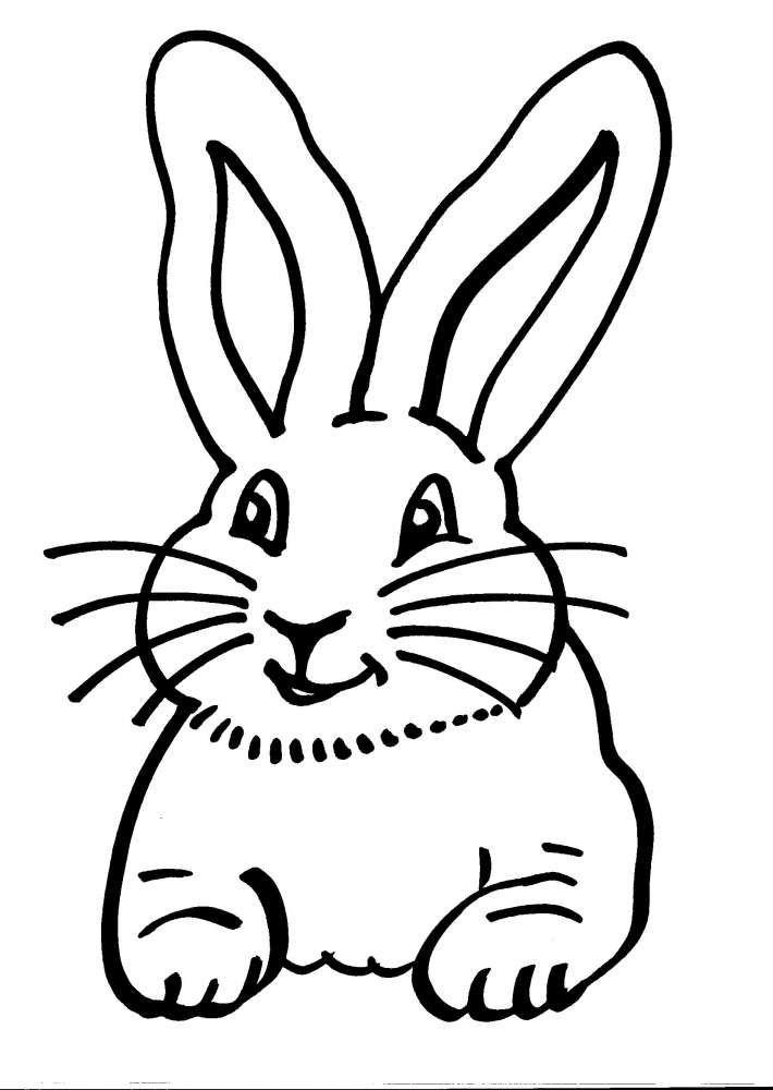 Risultati Immagini Per Il Gatto E Il Coniglio Da Disegnare