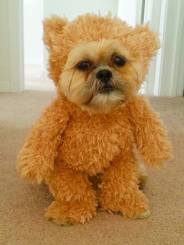 Funny Halloween Dog Costumes Sale Best Dog Halloween Costumes