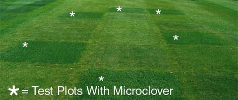 PT 769 R&R Eco-Turf Mix | LANDSCAPE | Clover lawn, Weeds in