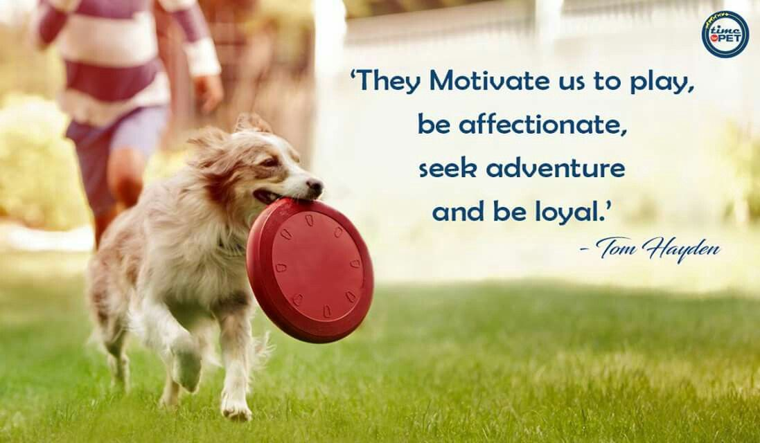 Quote of the day! quoteofthedaymorningquotestimeforpet