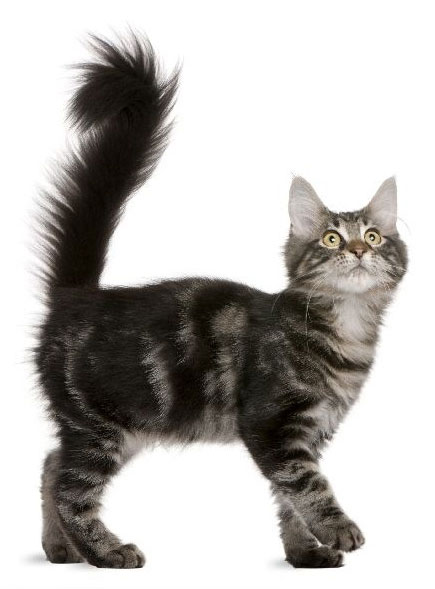 Asheville Veterinary Hospital Pet Vet on Patton in 2020
