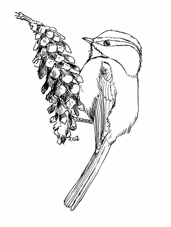 Pin By Jeannettepridgen On Coloring Pages Fruit Coloring Pages Coloring Pages Online Coloring Pages