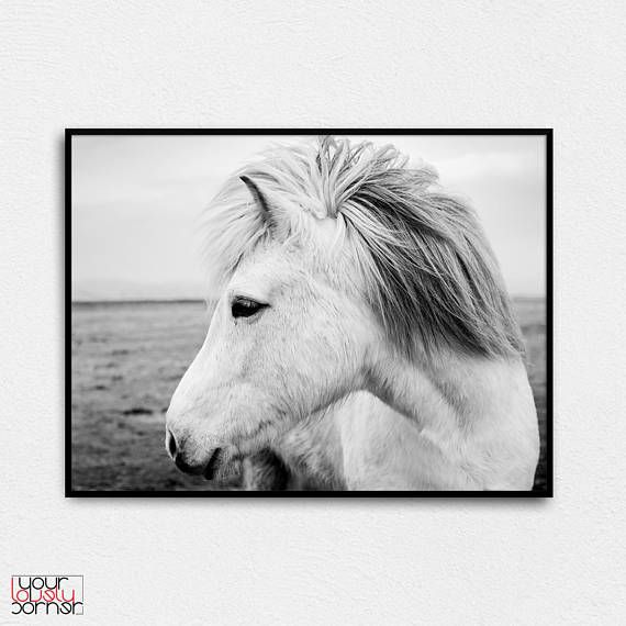 Horse photo horse print horse wall poster white horse wall