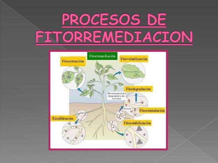 Plantas Utilizadas Para El Tratamiento De Aguas Residuales