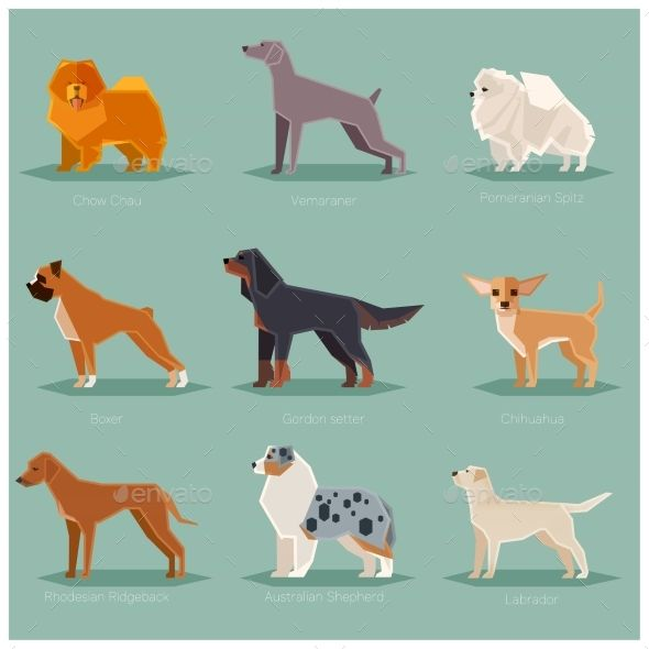Dog Flat Icons Set Dogs Dog Illustration Flat Icons Set