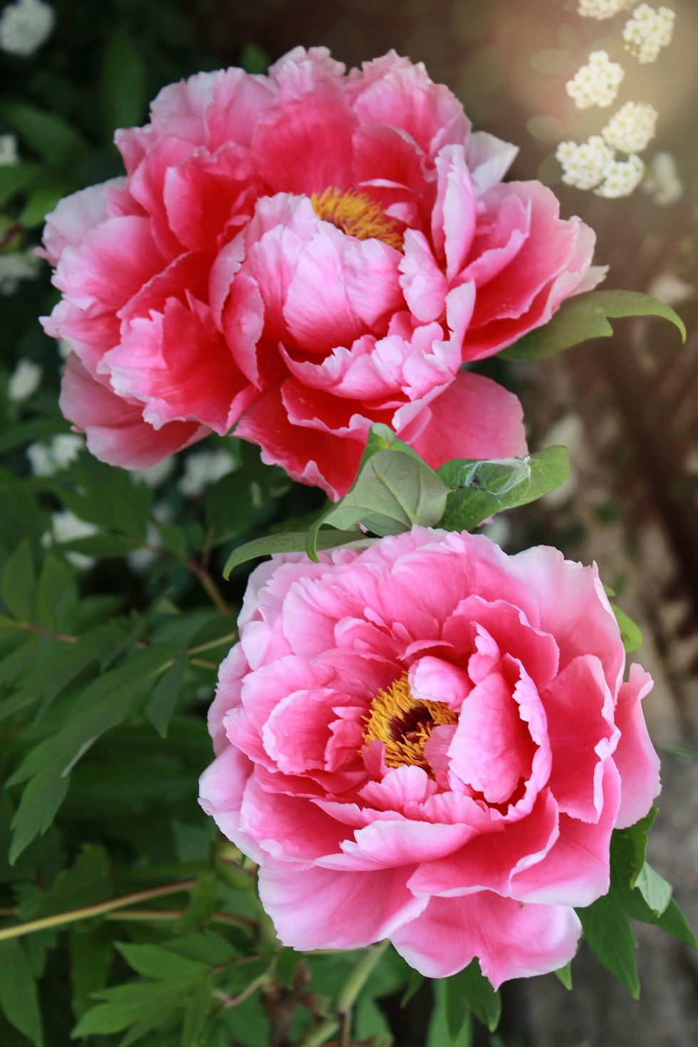 Light Pink Flowers Aesthetic