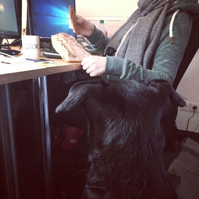 Luna 🐶 ist auf der Suche nach Nahrung - und sie möchte unbedingt den 🍪 #leckerschmecker  Wir verabschieden uns mit dem Bild ist Wochenende! #cookie #officedoglife #dogatoffice #officelife  _____________________________________________ #epixler #epixlerdog #epixlerlife #epixleroffice #epixlernewmedia #epixlerhosting #epixlerapp #suchmeisterei #office #friedrichshain #panko #prenzlauerberg #berlin #berlinfriedrichshainkreuzberg