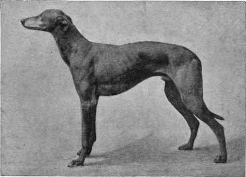 Black And White Medium Sized Dog
