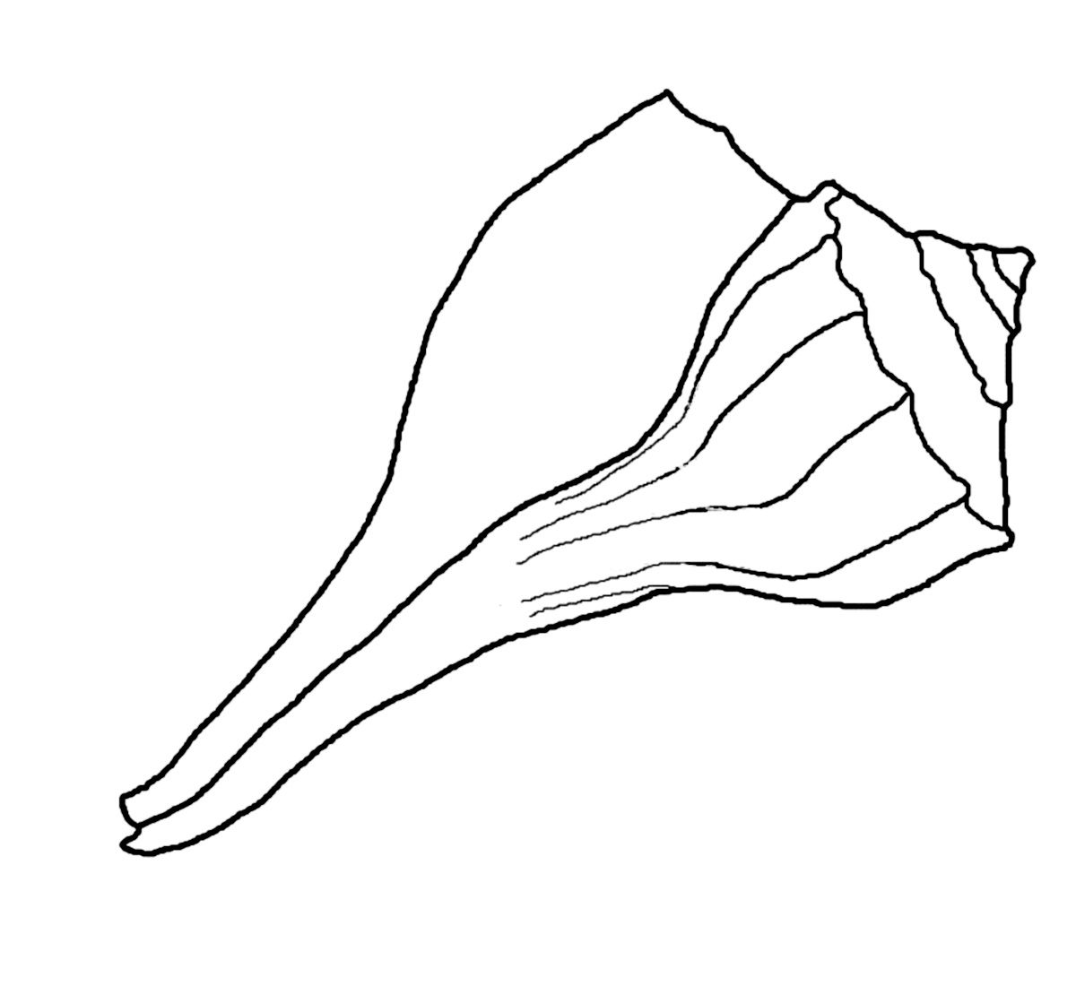 free seashell coloring pages - Seashell Coloring Pages Printable