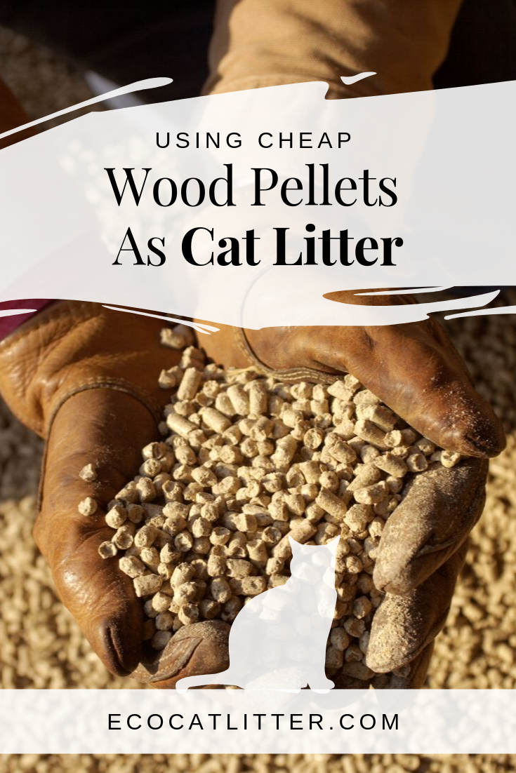Pin On Natural Cat Litter