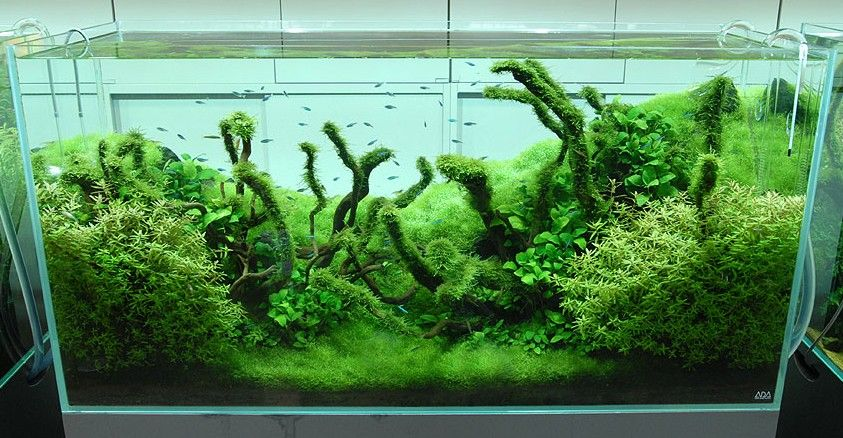Freshwater Aquarium Design Ideas 1 Find This Pin And More On Nature Aquascaping Style Tag Nature Aquariums And Aquascaping Ideas