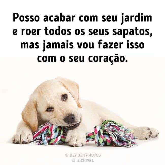 Pin Em Frases Cachorros