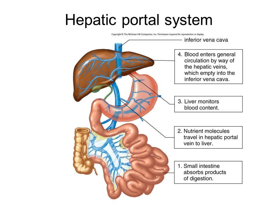 Image Result For Hepatic Portal System School Board Pinterest