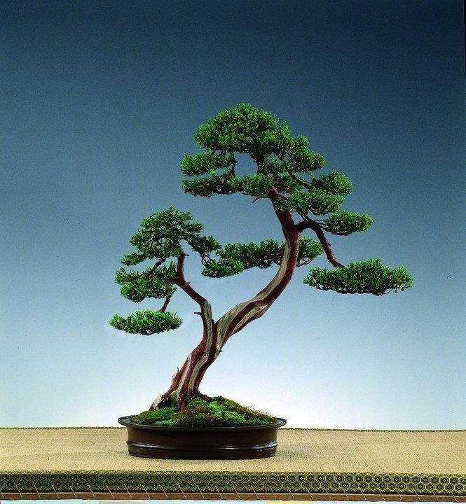 Bonsai nature bonsai e for Alberelli da esterno