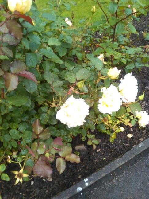 Flowers in Bradford