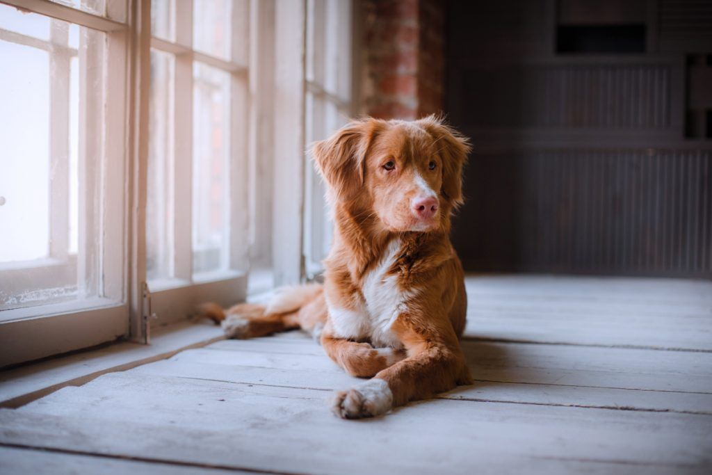 Don T Let The Winter Months Bore Your Dog Here Are A Few Great Indoor Activities To Keep Them Entertained Cat Apartment Pet Furniture Pets