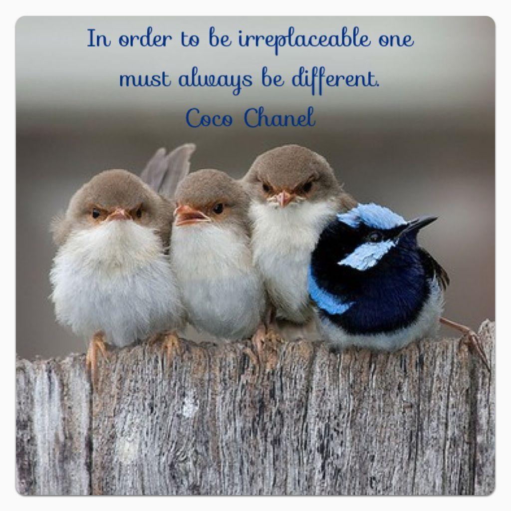 Coco Chanel Quote Quotes I Love Birds Cute Animals Animals