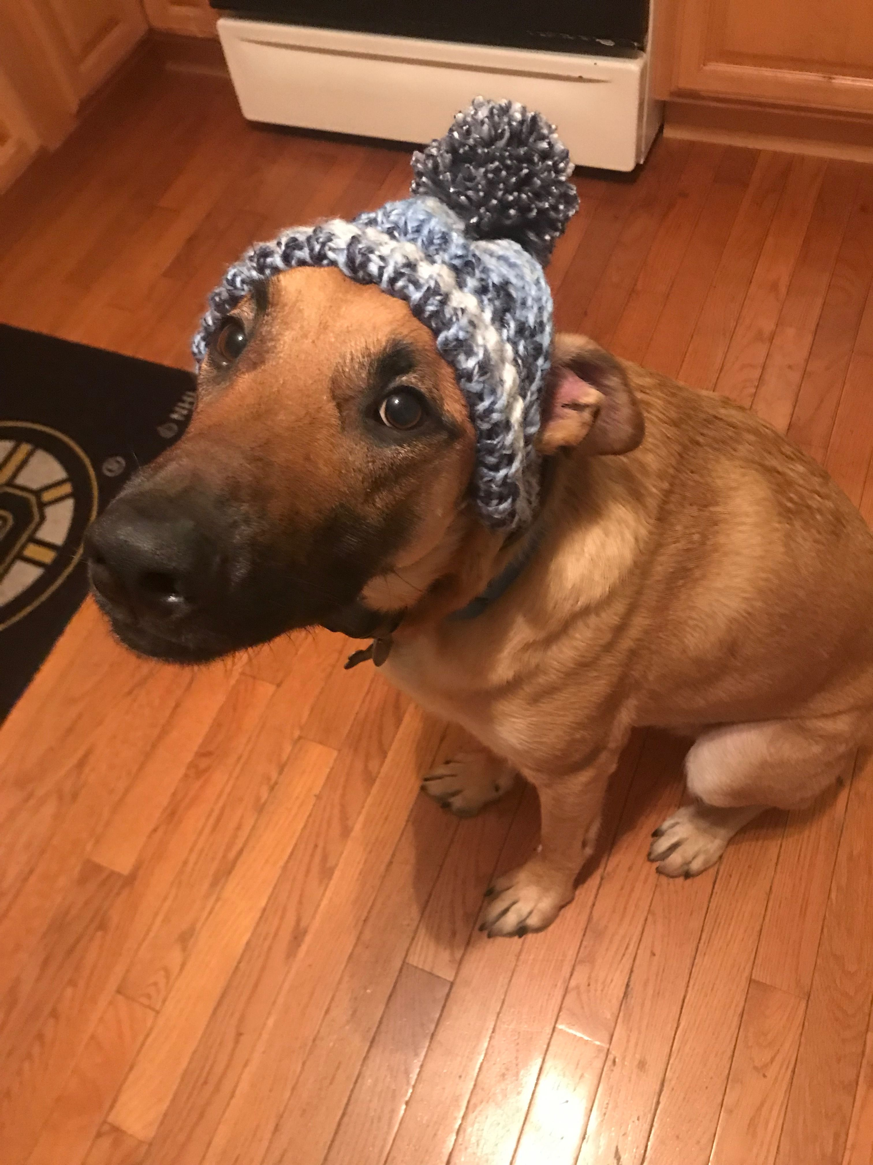 Knit Dog Hat He Hates Me For Making This Hat But So Cute Malinois Mama Loom Knitting Dog Hat Knitting