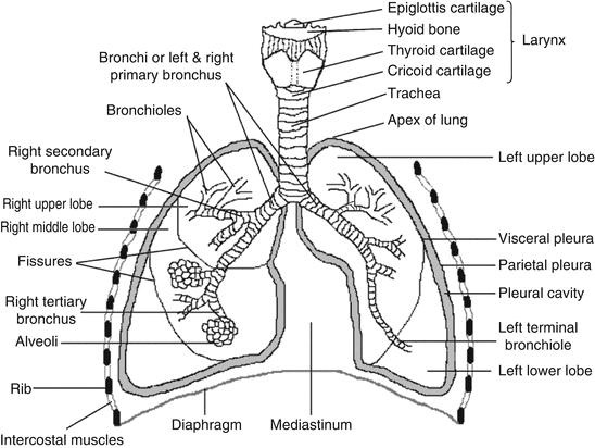 Pin On Pharmacy Anatomy