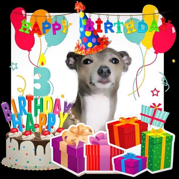 Happy Birthday. Italian Greyhound