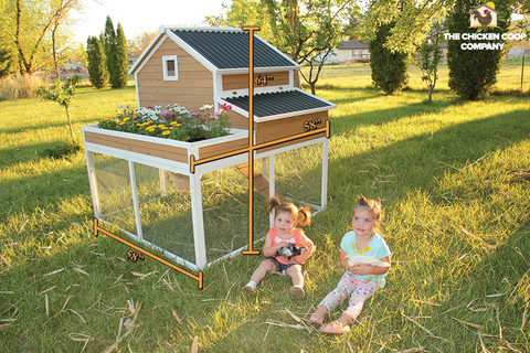 The Garden Girls Coop With Run Extension 5 12 Chickens