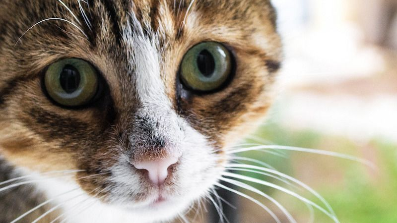 How To Get Your Cat To Stop Meowing At Your Door At Night Cat Training Cat Language Animals