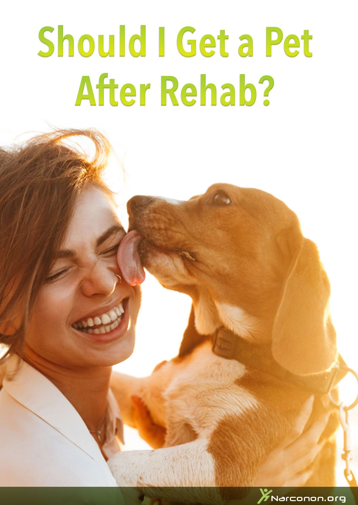 Should I Get A Pet After Rehab Rehab Pets Sober
